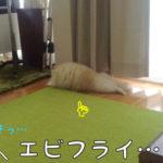 エビフライ犬