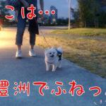 豊洲ペットポメラニアン犬