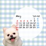 iphone壁紙ブルー15年05月