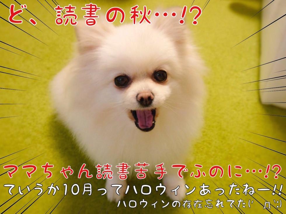 読書の秋・・・!