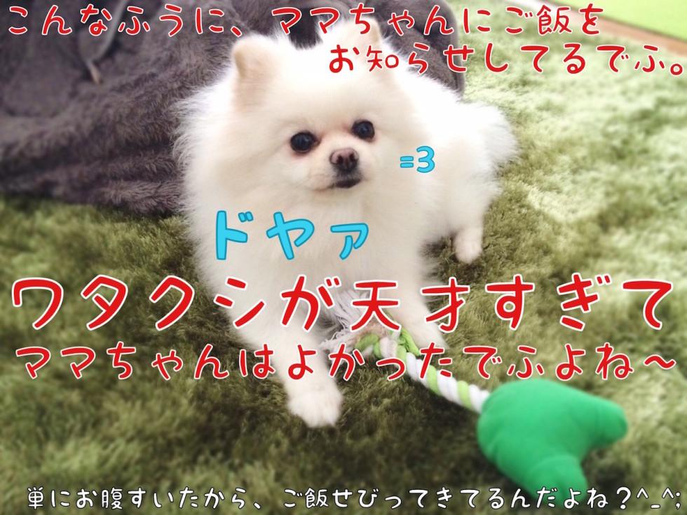 ドヤァ=3天才犬もふ
