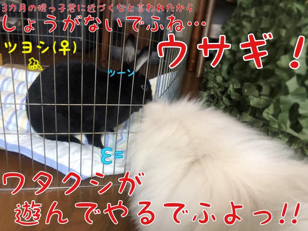 ウサギと犬 ツーン