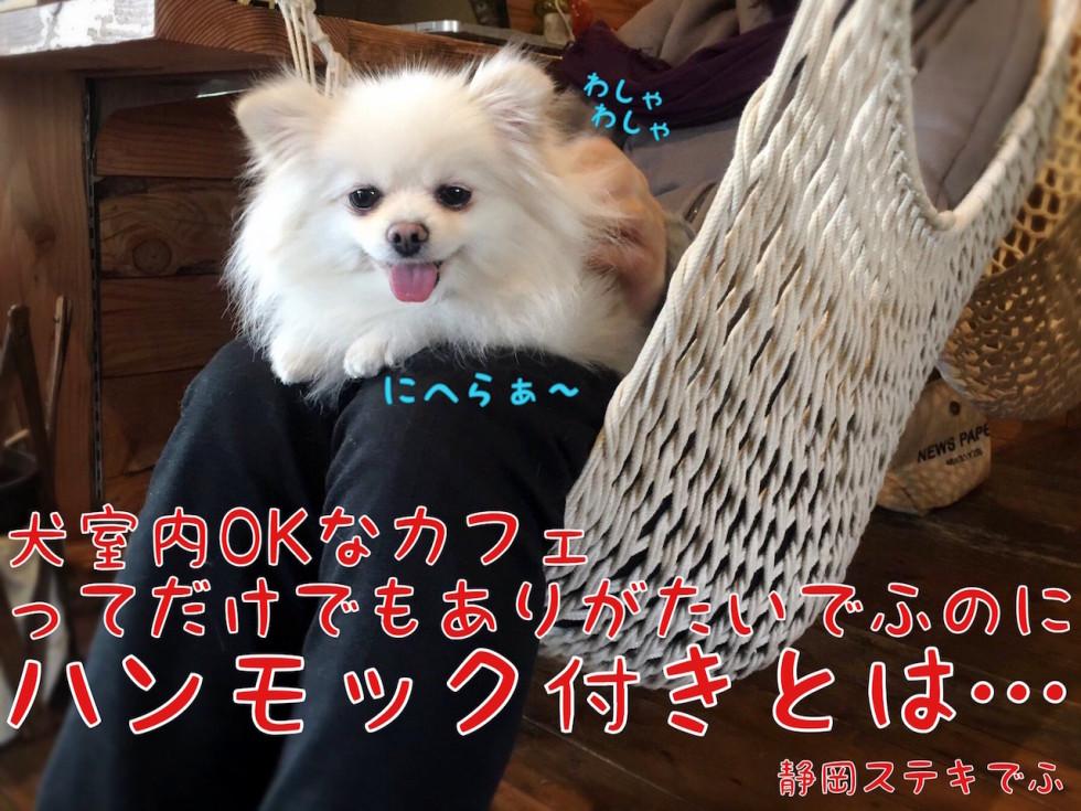 犬okでハンモック付きのカフェとは・・・ にへらぁ〜