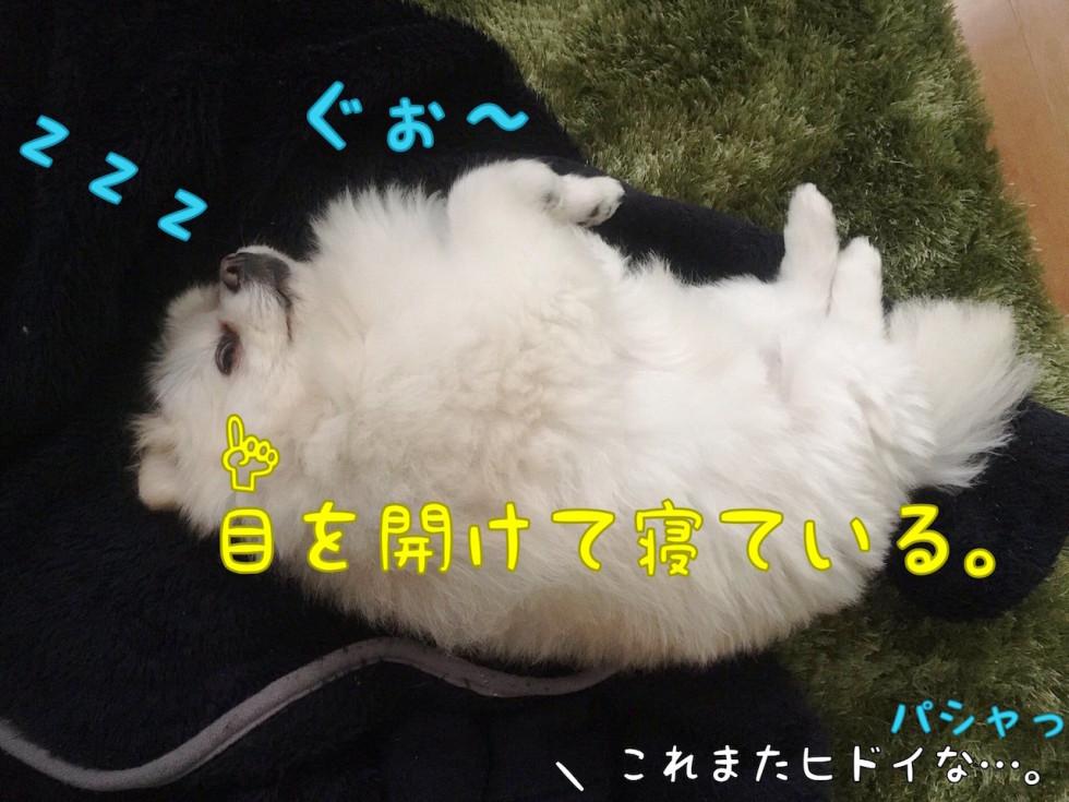 ぐぉ〜 zzz
