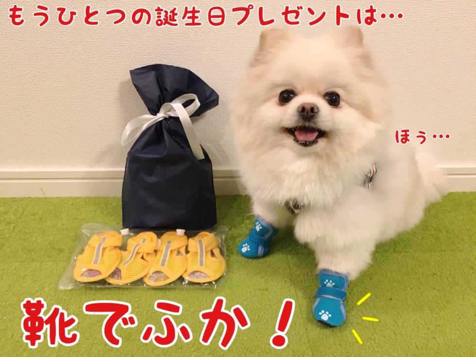 もう一つのプレセントは犬用の靴