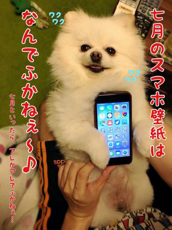 iPhoneを持つ犬