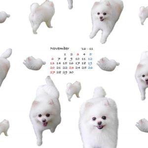 iPadウォールカレンダー11月シロ