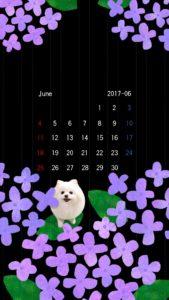 携帯壁紙 スマホ壁紙 iphone壁紙 2017年6月 紫陽花 黒
