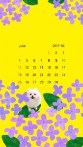 携帯壁紙 スマホ壁紙 iphone壁紙 2017年6月 紫陽花  黄色
