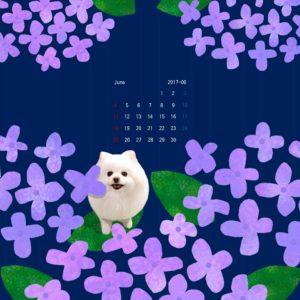 iPad壁紙 2017年6月 紫陽花 ポメ 紺