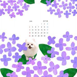 iPad壁紙 2017年6月 紫陽花 ポメ しろ