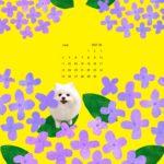 iPad壁紙 2017年6月 紫陽花 ポメ 黄