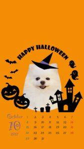 携帯壁紙2017年10月 ハロウィンかぼちゃ