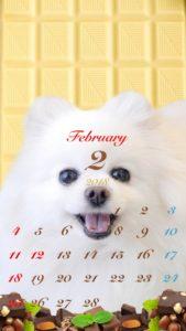 携帯壁紙 iPhone 2018年 2月 ホワイトチョコ ポメラニアン