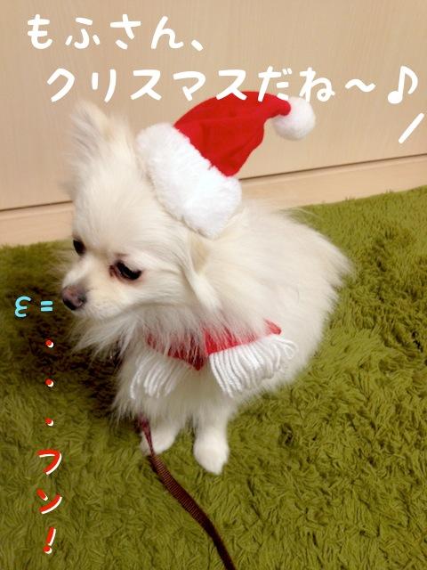 ママちゃん: もふさん、クリスマスだね〜♪  サンタの帽子とマフラーをつけられた白ポメラニアンもふ: ・・・フン。