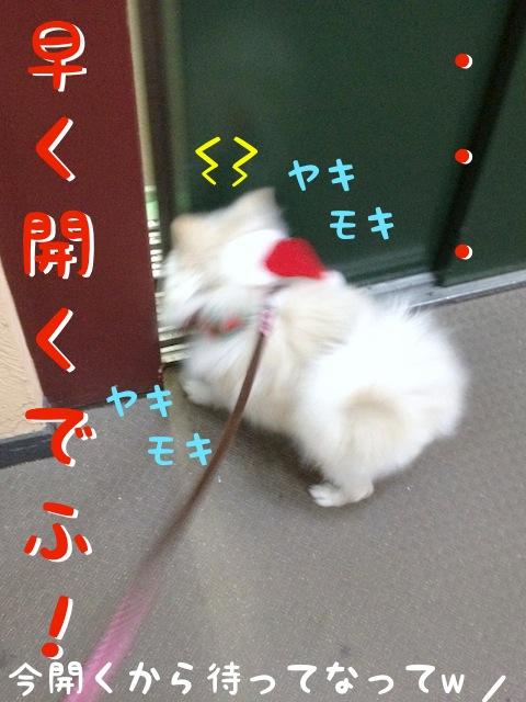 ゆっくりと開くエレベーターにヤキモキするもふ: 早く開くでふ!!!  ママちゃん: 今開くから待ってなって!