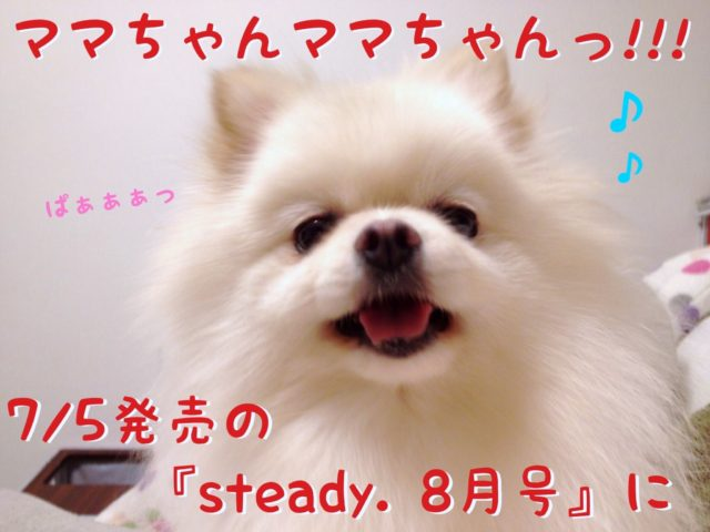 満面の笑みの白ポメラニアンもふ: ママちゃん!ママちゃん! 7月5日発売の「steady.8月号」に