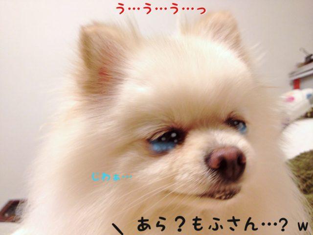 涙を浮かべるもふ: うっうっ・・・  ママちゃん: あら?もふさん?
