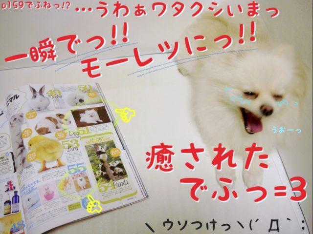 雑誌を開くもふ: 159ページでふね!? ・・・うわあワタクシいまっ 一瞬で!!! モーレツに!!! 癒されたでふ!!  ママちゃん: 嘘つけっ