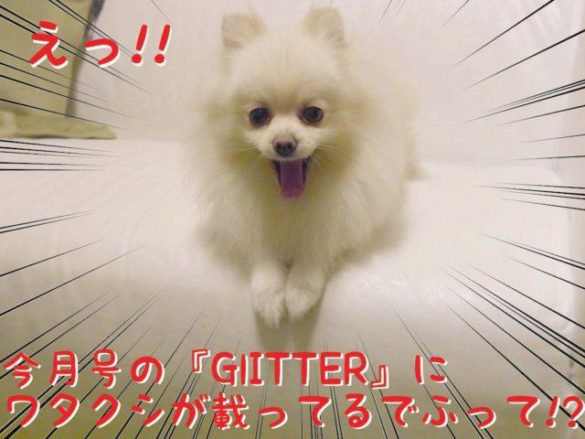 ソファに座る白ポメラニアンもふ: え! 今月号の「GLITTER」にワタクシが載ってるでふって?!