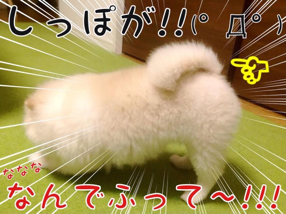 ななななんでふって〜!!!
