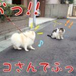 もふと猫ビクっ