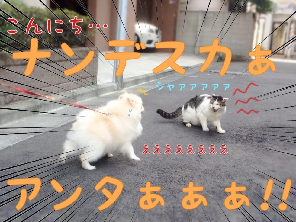 犬と猫シャァァァァ