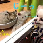 じーっ猫鍋と犬