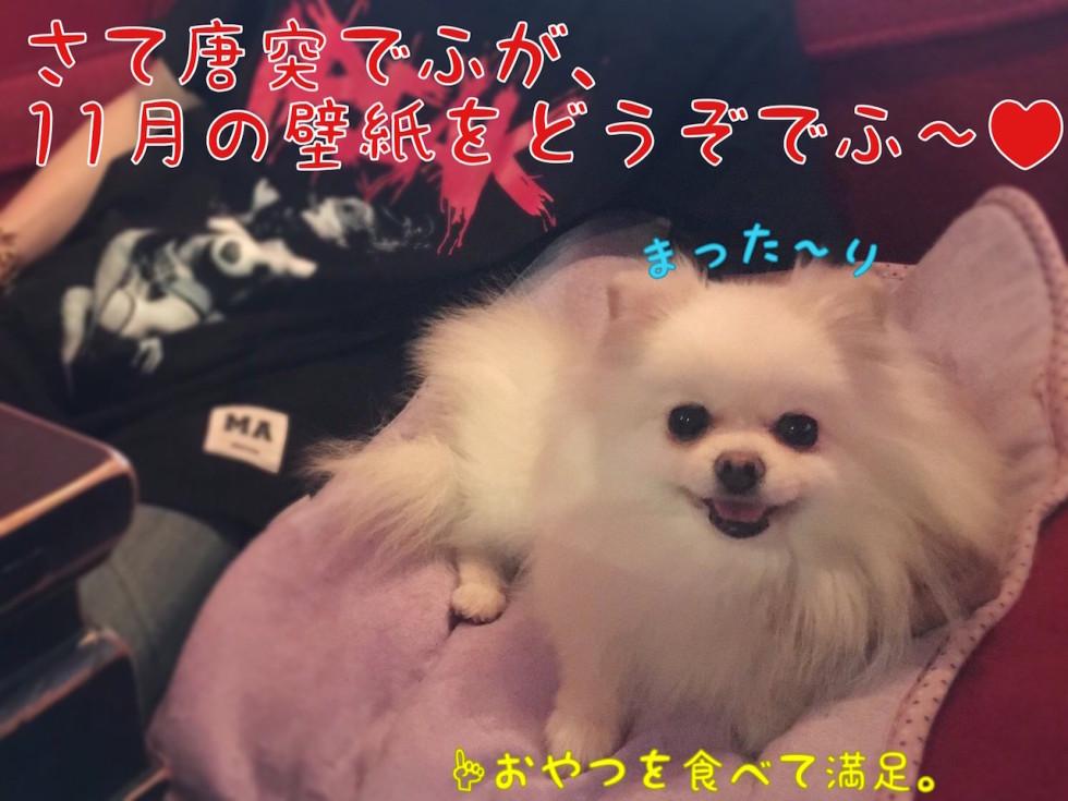 11月のiPhone壁紙紹介でふ まった〜り