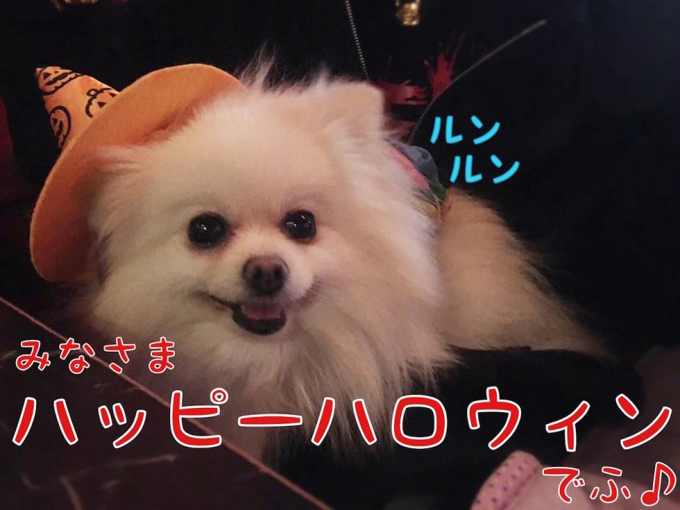 ルンルン ハッピーハロウィン 犬