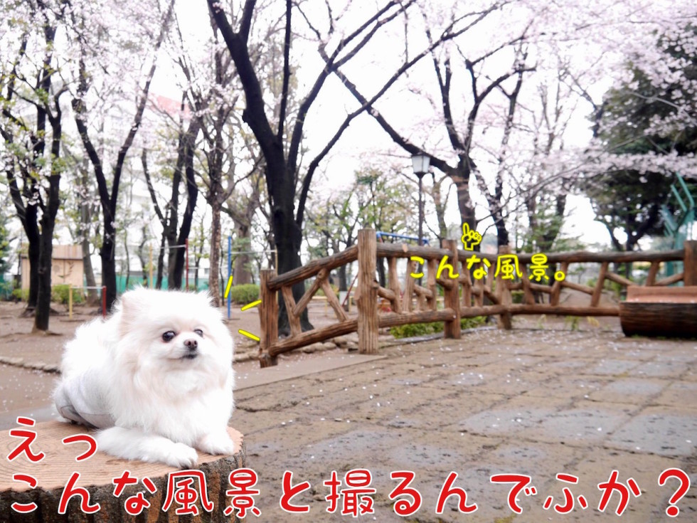 桜=こんな風景