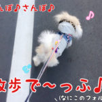 散歩で〜っふ♪