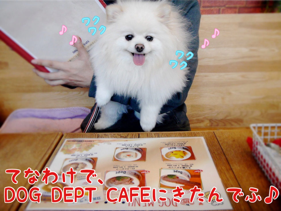 DOG DEPT CAFEに来たんでふ ワクワク