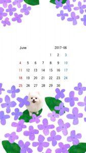 携帯壁紙 スマホ壁紙 iphone壁紙 2017年6月 紫陽花  白