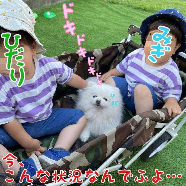 ママちゃんの双子の息子、みぎとひだりに囲まれてアウトドアキャリーに一緒に入っているもふ: 今、こんな状況なんでふよ・・・ドキドキドキ